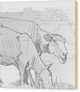 Sheep Pencil Drawing  Wood Print