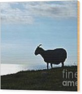 Sheep Silhouetted In Scotland Wood Print