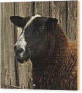 Sheep Wood Print