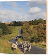 Sheep With Shepherd On A Quad Bike Wood Print