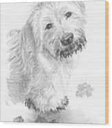 Sheepdog Muddy Pencil Portrait Wood Print