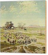 Sheepherding Montana Wood Print