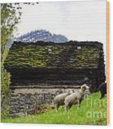 Sheeps And Rustic House Wood Print