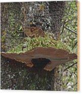 Shelf Mushroom With Moss Wood Print
