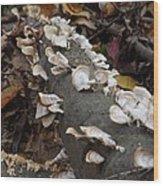 Shelf Mushrooms In Autumn Wood Print