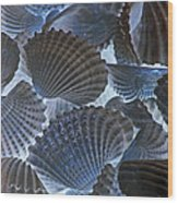 Shell Ballet Wood Print