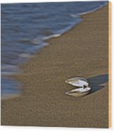 Shell By The Shore Wood Print