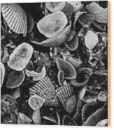 Shell Collection 3 Wood Print