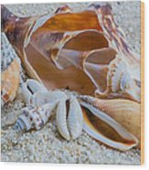 Shell Collectors Dream Wood Print