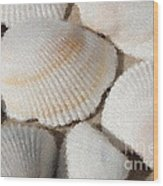 Shell Effects 1 Wood Print