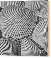Shell Effects 10 Wood Print