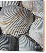 Shell Effects 5 Wood Print