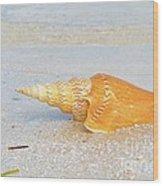 Shell On Beach Wood Print