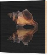 Shell Series Reflection II Wood Print by Brian Middleton