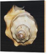 Shell Solo II Wood Print