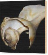 Shell Solo IIi Wood Print