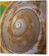 Shell Spiral Wood Print