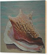 Shell Three - 3 In A Series Of 3 Wood Print