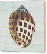 Shell Treasure-b Wood Print