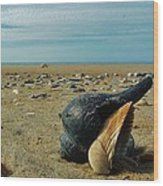 Shells A Plenty Hatteras Point 5 12/5 Wood Print