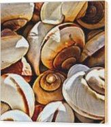 Shells Galore Wood Print