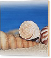 Shells In Sand Wood Print