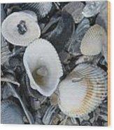 Shells In Shells 2 Wood Print