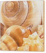 Shells Wood Print by Jean Noren