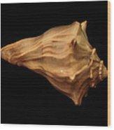 Shells Of The Gulf Coast 9 Wood Print