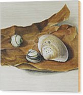 Shells On Paper Wood Print by Horst Braun