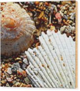 Shells On Sand Wood Print