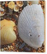 Shells On Sand2 Wood Print by Riad Belhimer