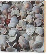 Shells On Treasure Island Wood Print by Carol Groenen
