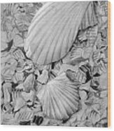 Shells One Wood Print