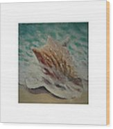 Shells Triptych 2 Wood Print by Don Young