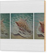 Shells Triptych Wood Print by Don Young