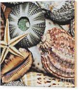 Shellscape Wood Print