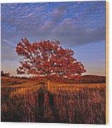 Shenandoah Tree Wood Print
