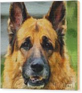 Shep  - German Shepherd Wood Print