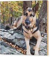 Shepherd In The Fall Wood Print