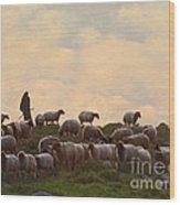 Shepherd With Sheep Standard Size Wood Print