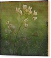 Shepherd's Purse Wood Print
