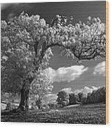 Shepton Tree Wood Print