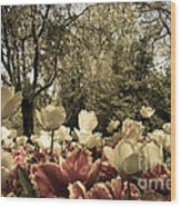 Sherwood Gardens 7 Wood Print
