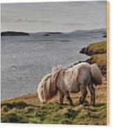 Shetland Pony At Shore  Shetland Wood Print