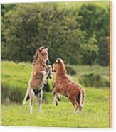 Shetland Pony's Wood Print