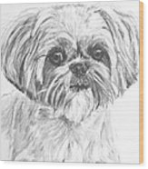 Shih Tzu Portrait In Charcoal Wood Print by Kate Sumners