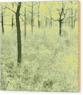 Shimmering Spring Day Wood Print
