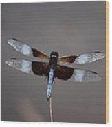 Shimmering Widow Skimmer Wood Print