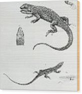 Shingled Iguana Wood Print